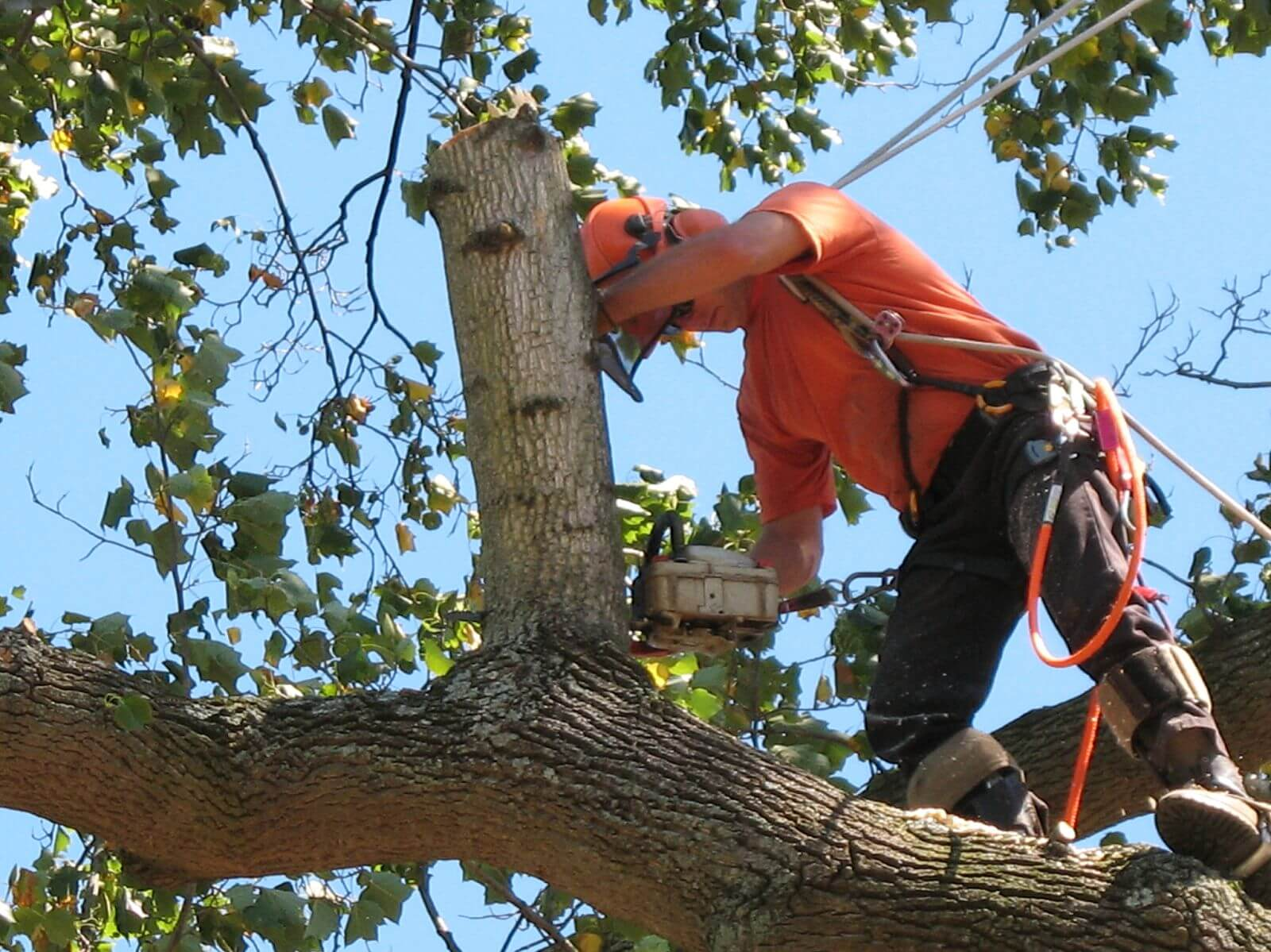 How Tree Service Helps Your Tree