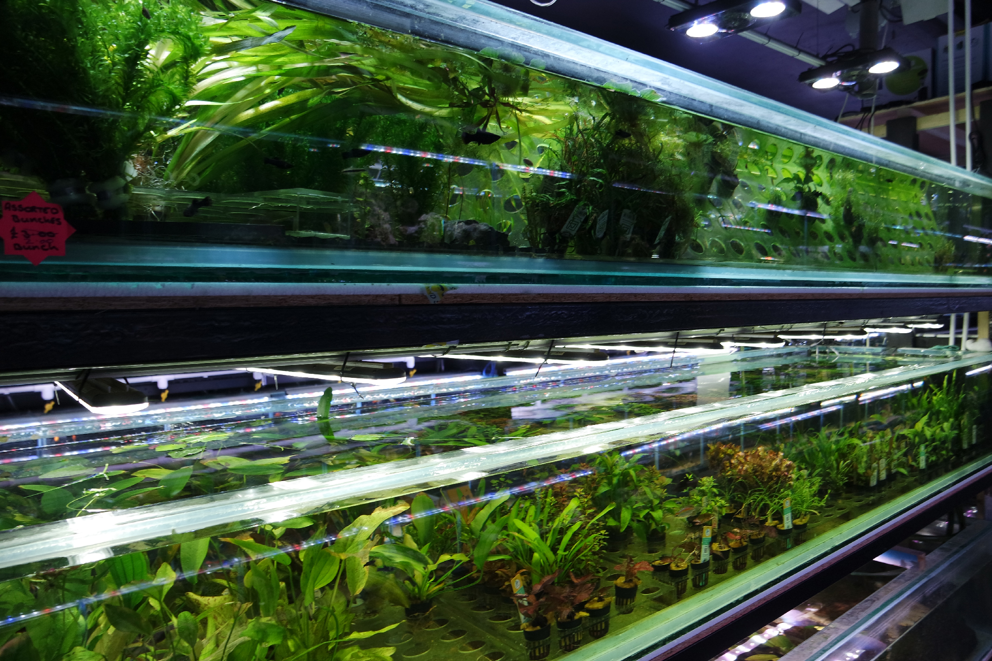 The Best Aquarium Plants That Even a Beginner Can Grow