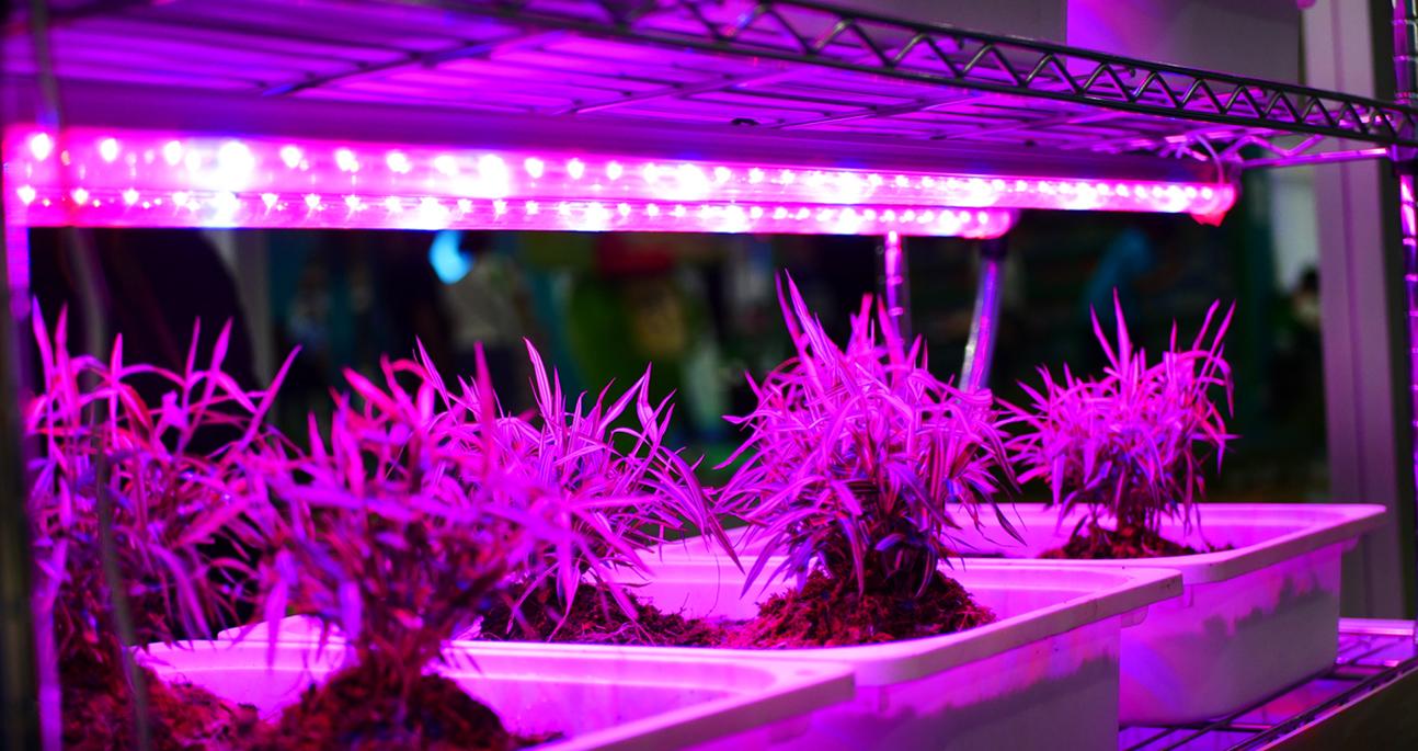 best led grow lights 2018