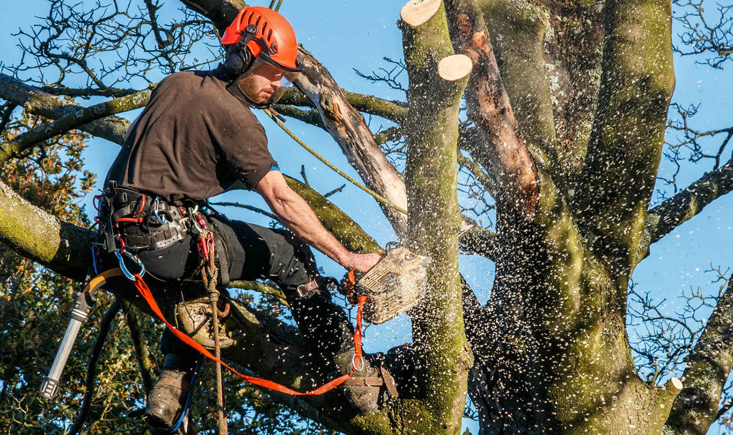 Questions You Should Ask When Hiring a Tree Trimming Company