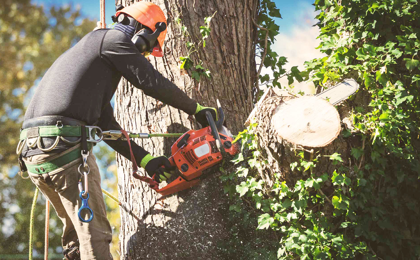 Why You Shouldn't Do Tree Removal By Yourself